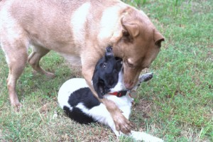 radar and cherry dogs