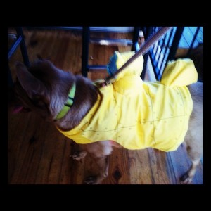 radar yellow submarine dog costume